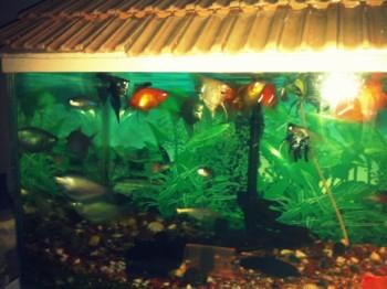 2013Jul21 – Boys Party @ Jitu's Home