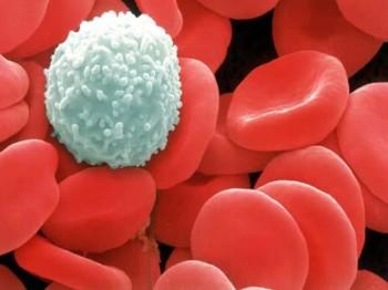 Medicine for Blood Cancer (Leukemia)